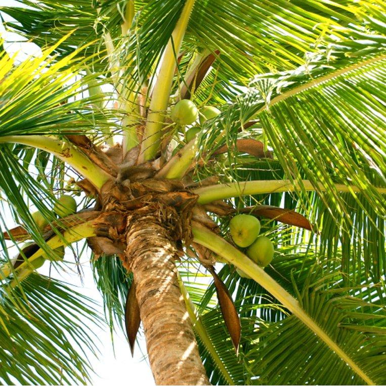Kokosöl 200 ml