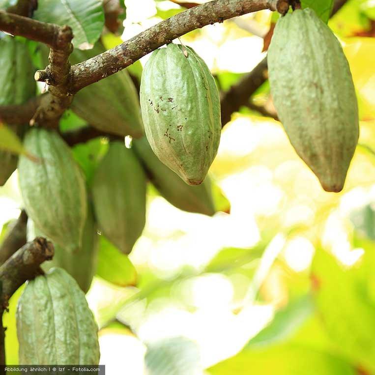 Enthäutete Kakaobohnen, bio 500 g
